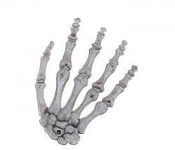 Hand Skelett